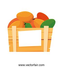 Isolated mangoes fruit box vector design