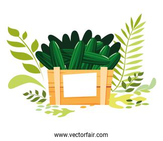 Isolated cucumbers icon vector design