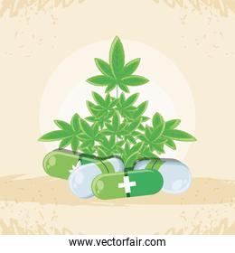 medicine cannabis with leaf and capsules