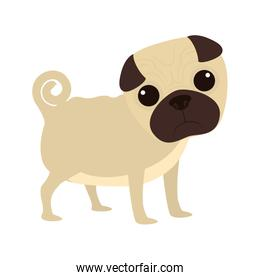 Animal and Pet love. Dog cartoon  icon. vector graphic