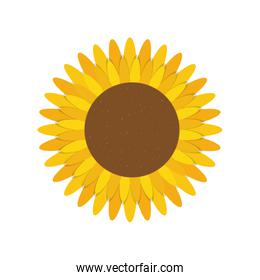 cute sunflower nature isolated icon