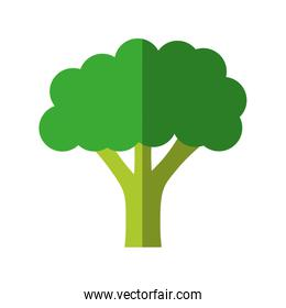 broccoli icon. Organic and healthy food. vector graphic