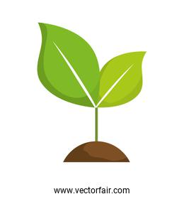 leaves icon. Nature design. Vector graphic