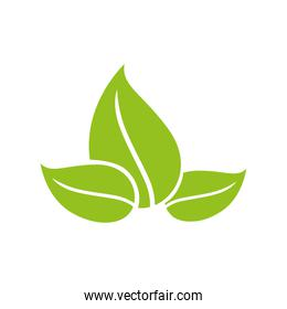 leaves icon. Plant and nature design. Vector graphic