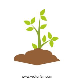 Plant nature with leaves isolated icon