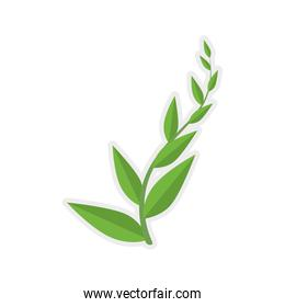 green leaf icon. Nature and plant  design. Vector graphic