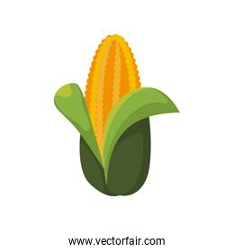 Corn icon. Organic and Healthy food. Vector graphic