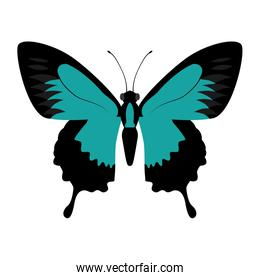 blue Butterfly icon. Insect design. Vector graphic