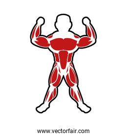 Muscle man icon. Bodybuilder design. Vector graphic