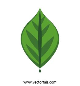 Green leaf icon. Nature and ecosystem design. Vector graphic