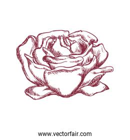 Rose flower icon. Nature and Garden concept. Vector graphic