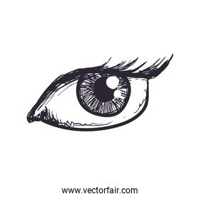 Female eye icon. View and look design. Vector graphic