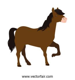 Horse animal farm pet character icon. Vector graphic