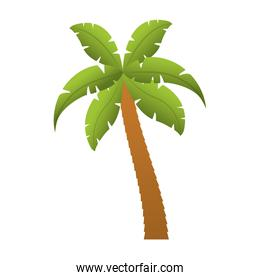 palm tropical tree isolated icon