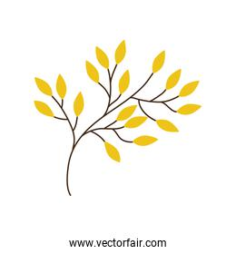 branch yellow leaves image