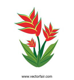 heliconia flower spring image