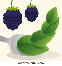 blueberry vegan fruit fresh food
