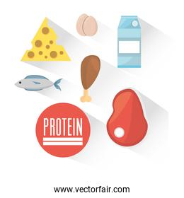protein product ingredient food