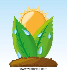 photosynthesis process in the plants
