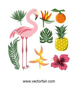 beautiful set icon with exotic flamingo and tropical elements
