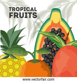 concept related with tropical fruits
