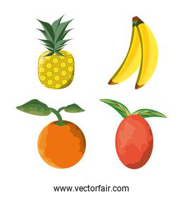 set icon concept related with tropical fruits