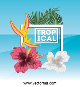 tropical concept with beautiful and colorful flowers