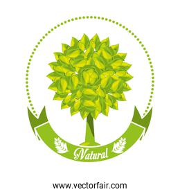 emblem of tree with leaves and ribbon