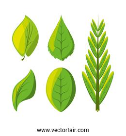 set of natural and ecology icons leaves design