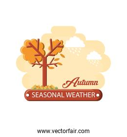 Seasonal weather design