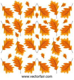 dry leaves  background design