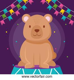 cute bear teddy in stage