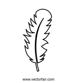 feather icon image