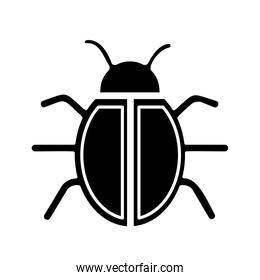 bug insect icon