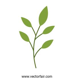 stem with leaves icon