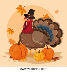 turkey with pumpkins and hat pilgrim of thanksgiving day