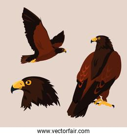 imposing hawks birds with different poses
