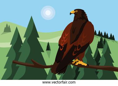 imposing hawk in the branch with landscape