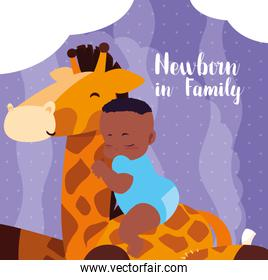 newborn in family card with baby boy afro and giraffe stuffed