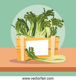 nature fresh celery vegetables in wooden crate