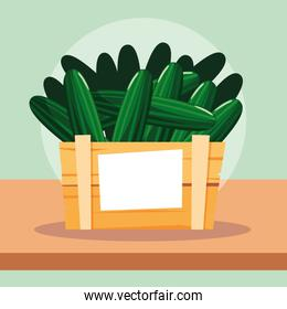 cucumber fresh vegetable in wooden crate
