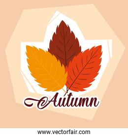 hello autumn poster with set leafs