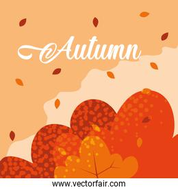 hello autumn poster with leafs pattern