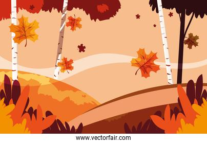 beautiful autumn landscape scene with trees