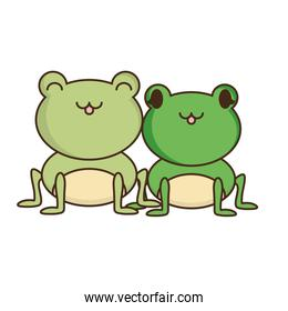 couple of cute frogs over white