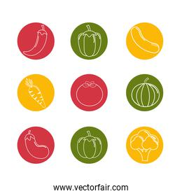 organic vegetables background icon