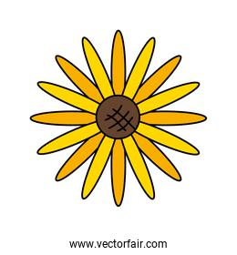 nice sunflower with petals