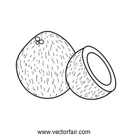 line coconot fruit with one slice