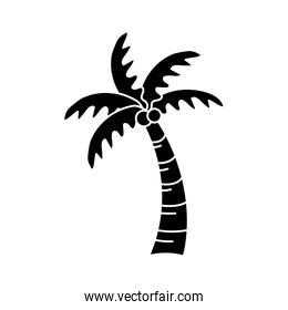 contour palm with coconuts and leaves