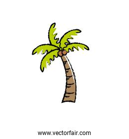 palm with coconuts and leaves